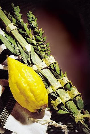 Basic Kosher Lulav and Etrog set from Israel - Click Image to Close